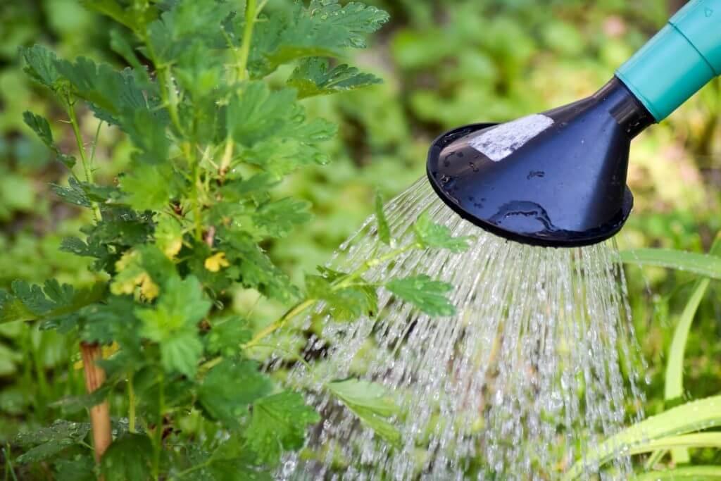 השקיה